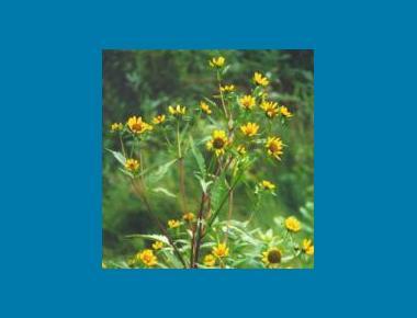 Flower and stem arrangement Brian Klinkenberg