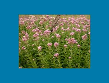 Plant cluster Ben Legler