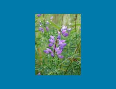 Flower spike Brian Klinkenberg