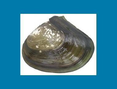 External shell view Ethan Nedeau
