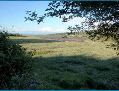 Crescent Beach salt marsh, Boundary Bay P. Zevit