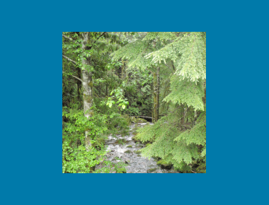 Upper Coquitlam Watershed P. Zevit