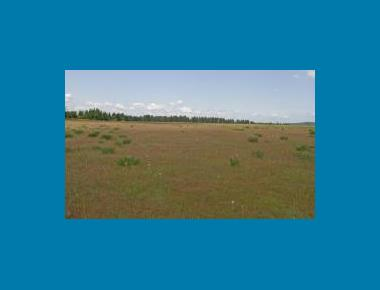 Typical prairie habitat used Rod Gilbert