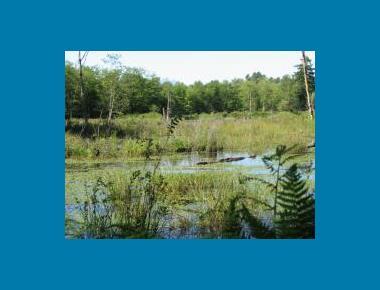 West Creek Wetlands P. Liley